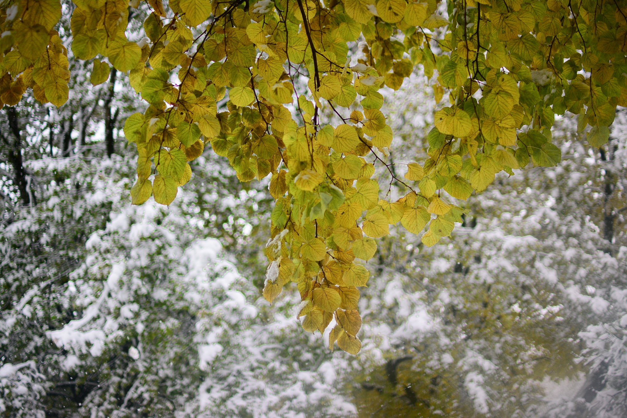 snow leaves park