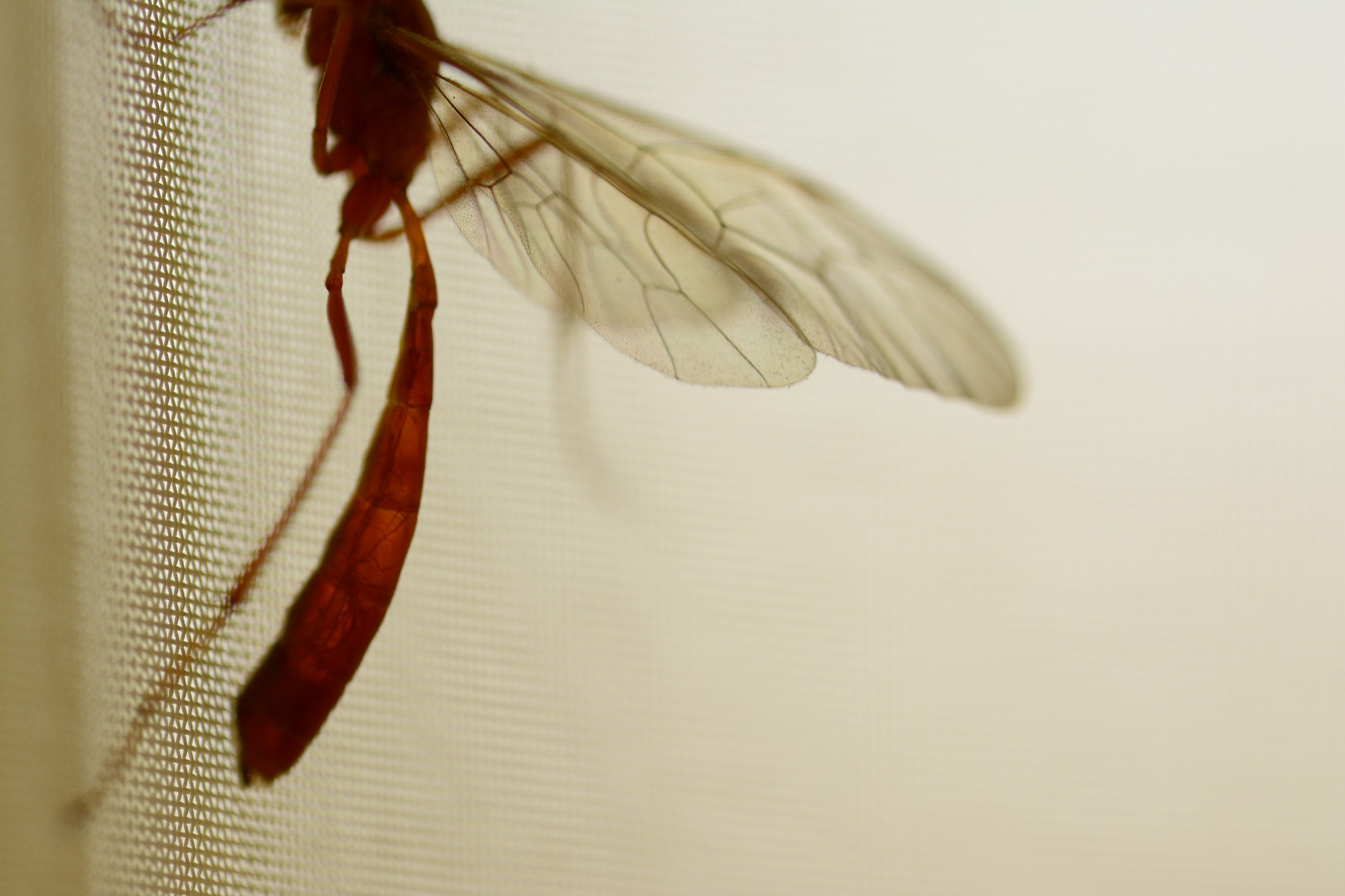 dragonfly curtain insects