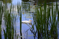 White duck duck birds animals