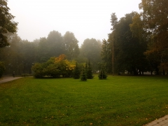 Foggy park in the morning fog park morning fall